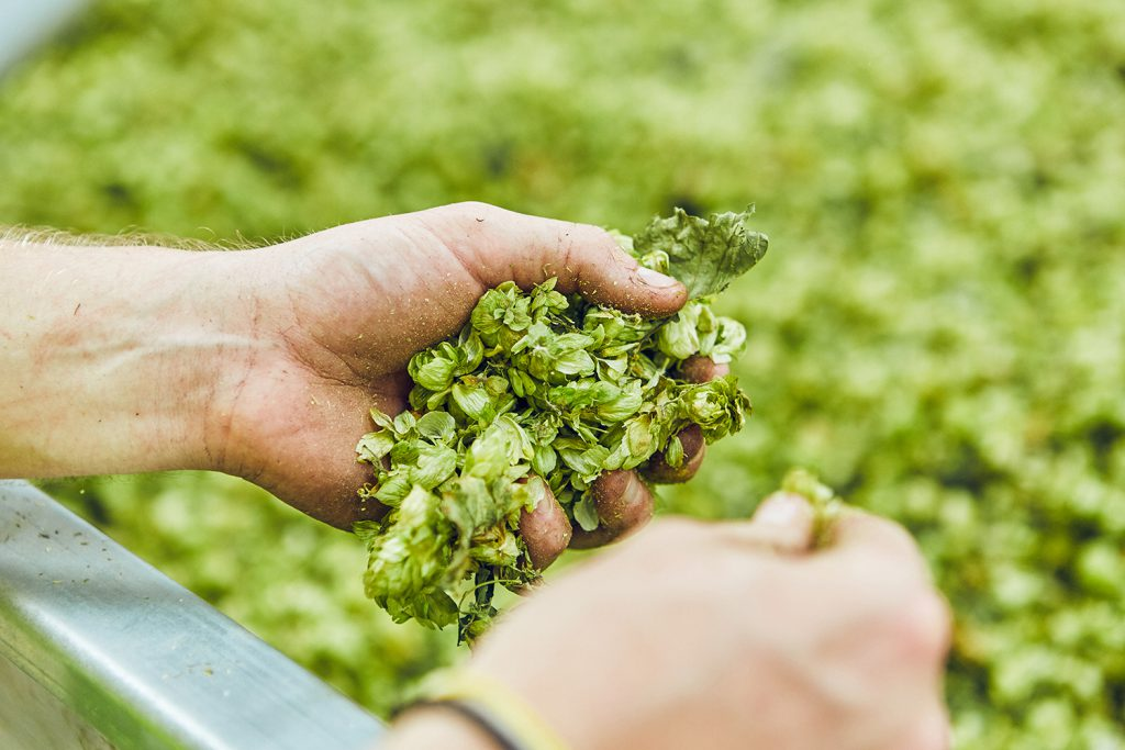 English Hops are Underrated