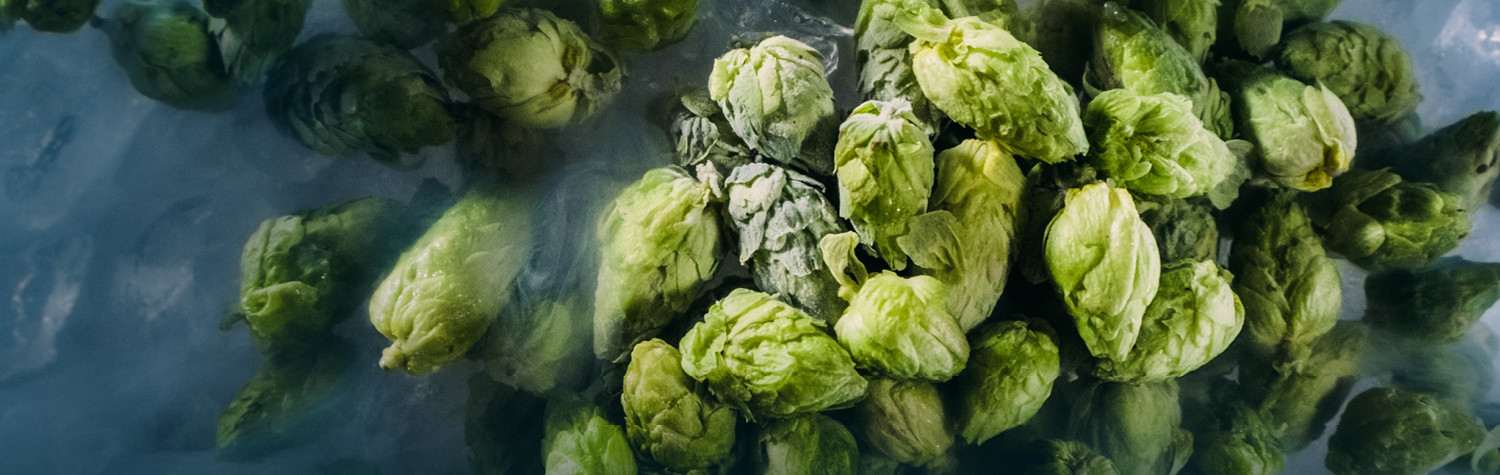 Yakima Chief Hops bring fresh hop ales to the global craft beer community.